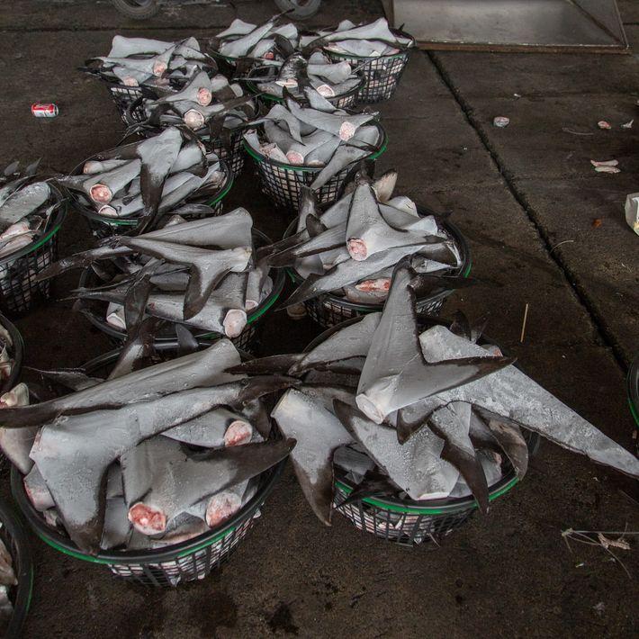 Cestas de aletas de tiburón