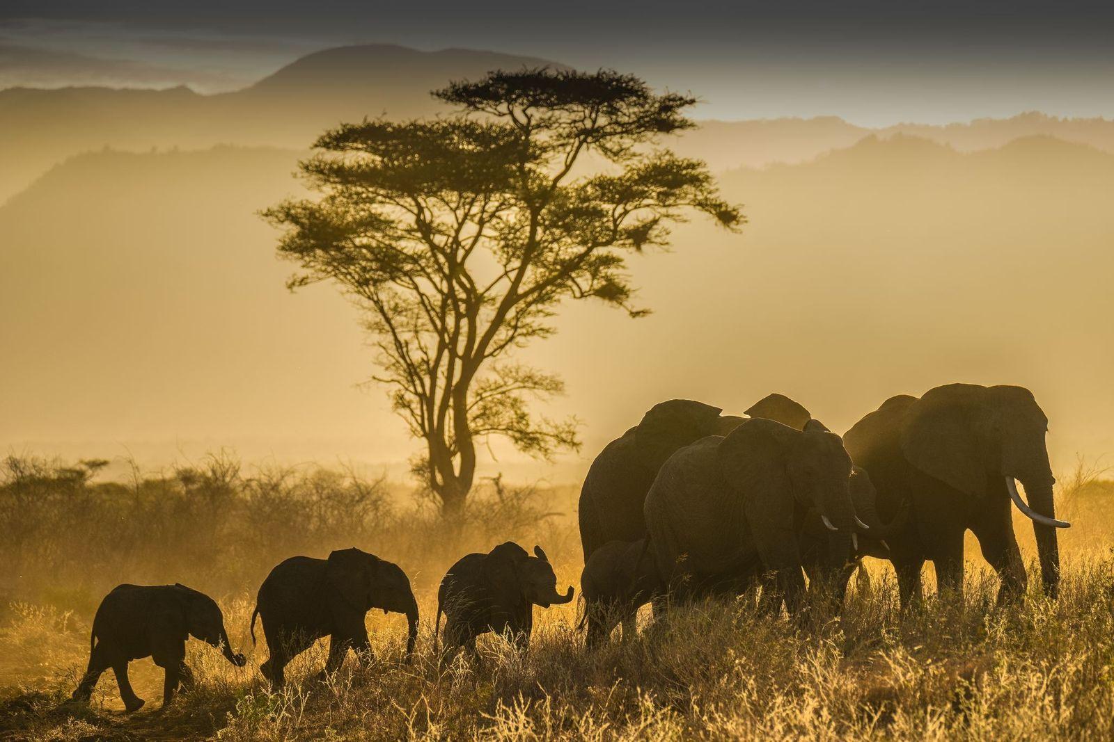 Parque nacional de Meru, Kenia