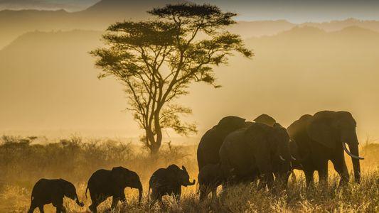30 imágenes asombrosas de animales del mundo