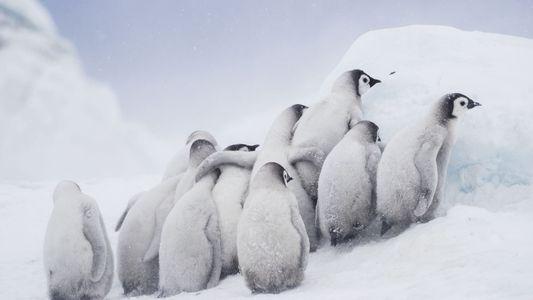 Concurso de Fotografía de Viajes 2019: 30 fotos de animales salvajes