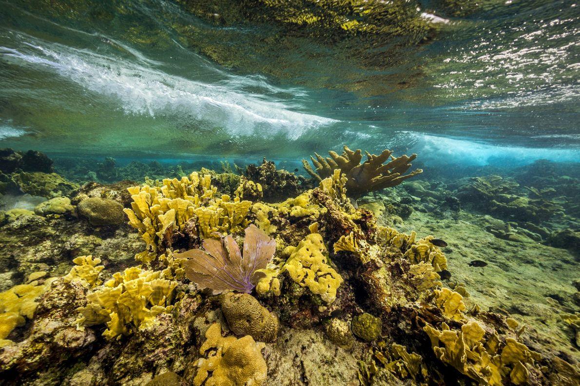 Monumento nacional del arrecife de la isla Buck
