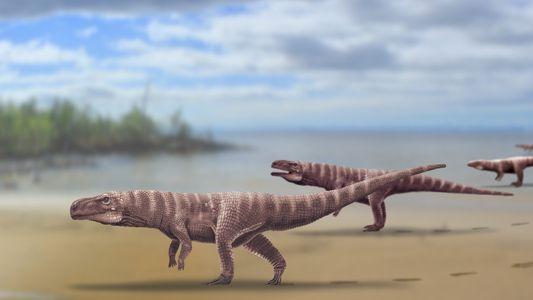 Este misterioso pariente de los cocodrilos podría haber caminado sobre dos patas