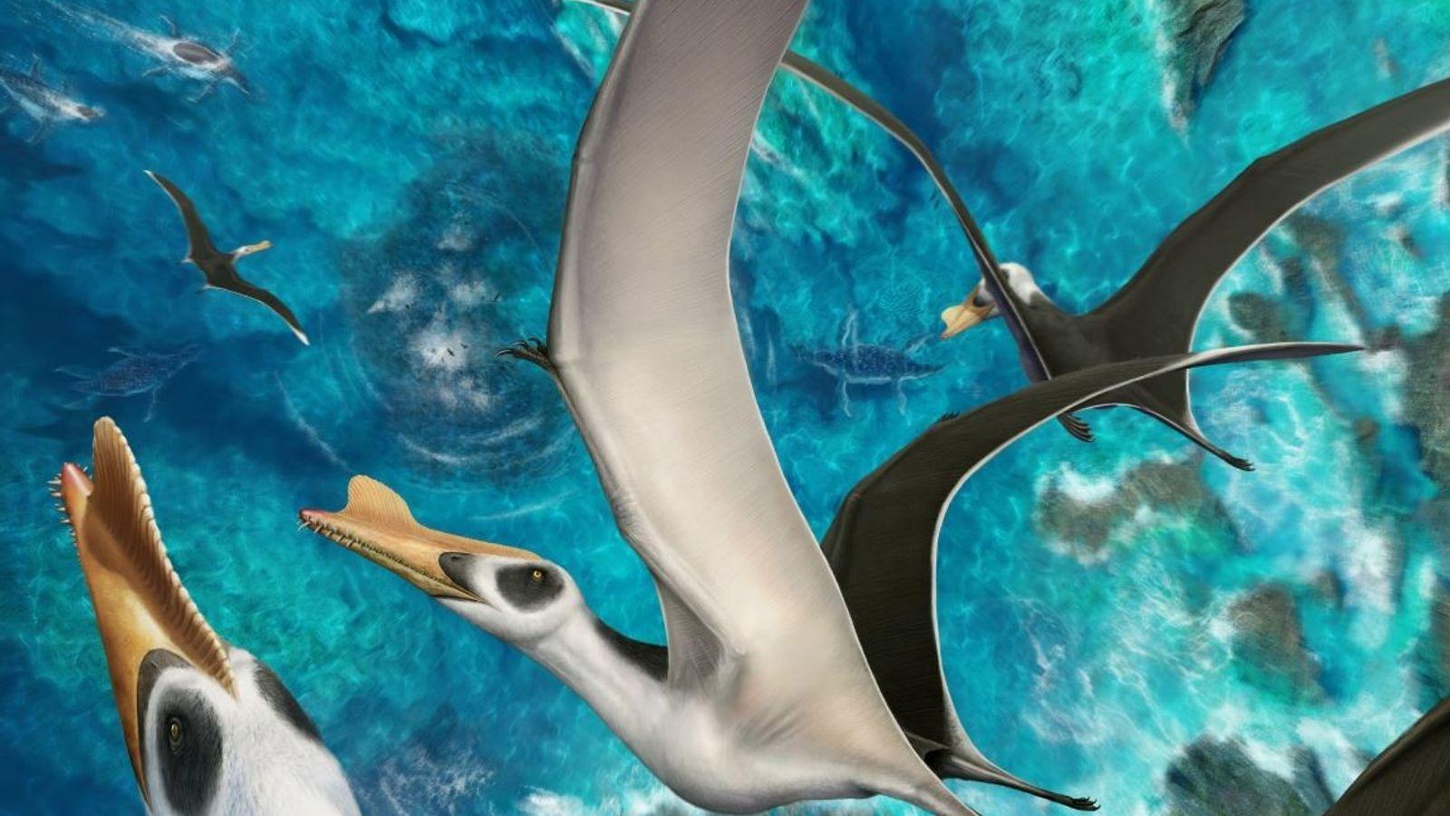 Pterosaurio Peninsula iberica