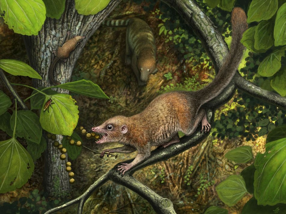 ¿Convivieron los primates antiguos con el T. rex? Nuevas pruebas respaldan esa teoría