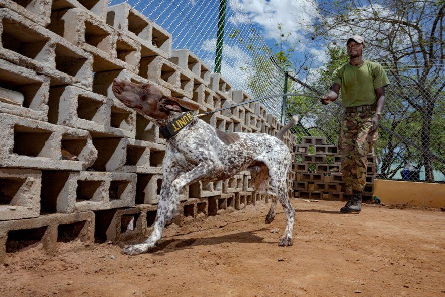 Parque nacional de Garamba, RDC: Ayifa Kore Isaac, guardabosques y cuidador de perros, trabaja con Pax, ...