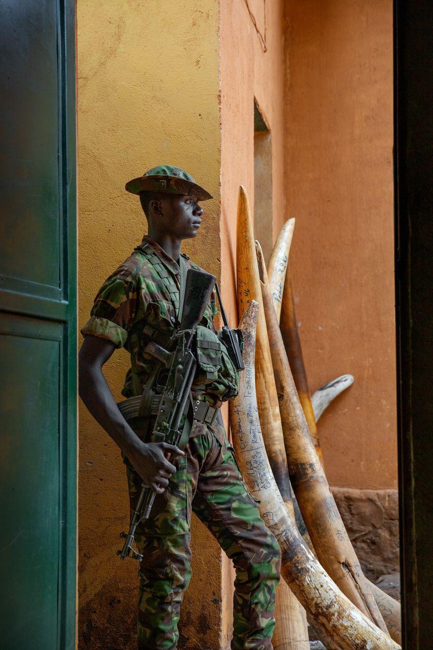 Parque nacional de Garamba, República Democrática del Congo: Garamba, en una región devastada por la guerra, ...