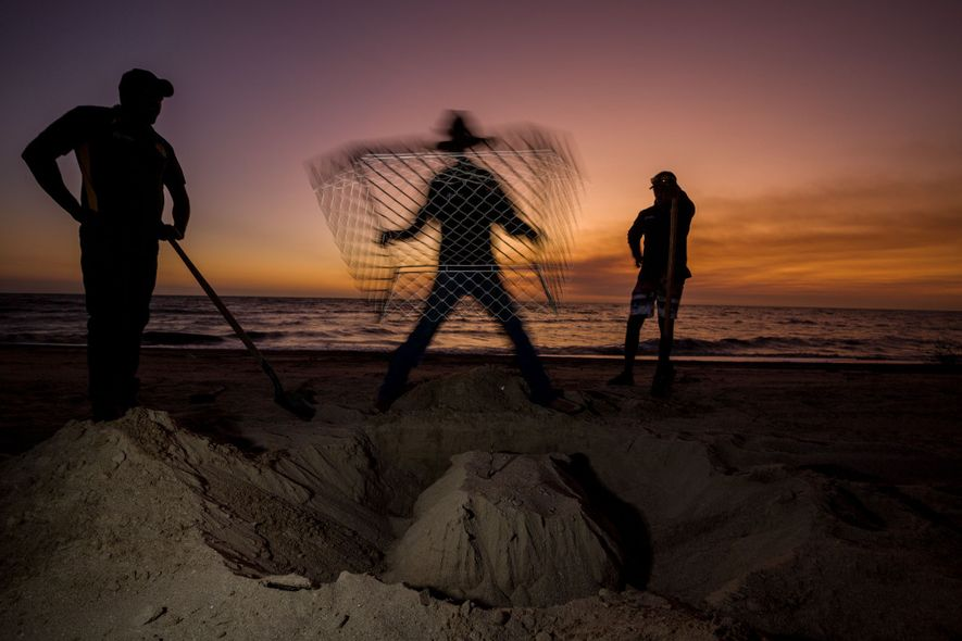 En la península del cabo York, en la costa oeste de Australia, los guardias del programa ...