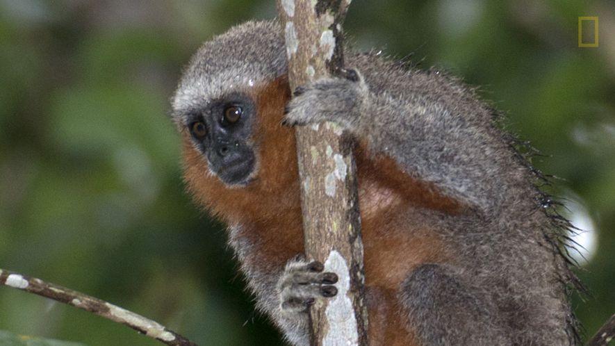 En el Amazonas, una nueva especie es descubierta día sí, día no