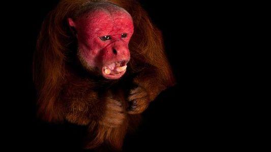 9 animales con un rostro que tan solo a una madre podría gustar
