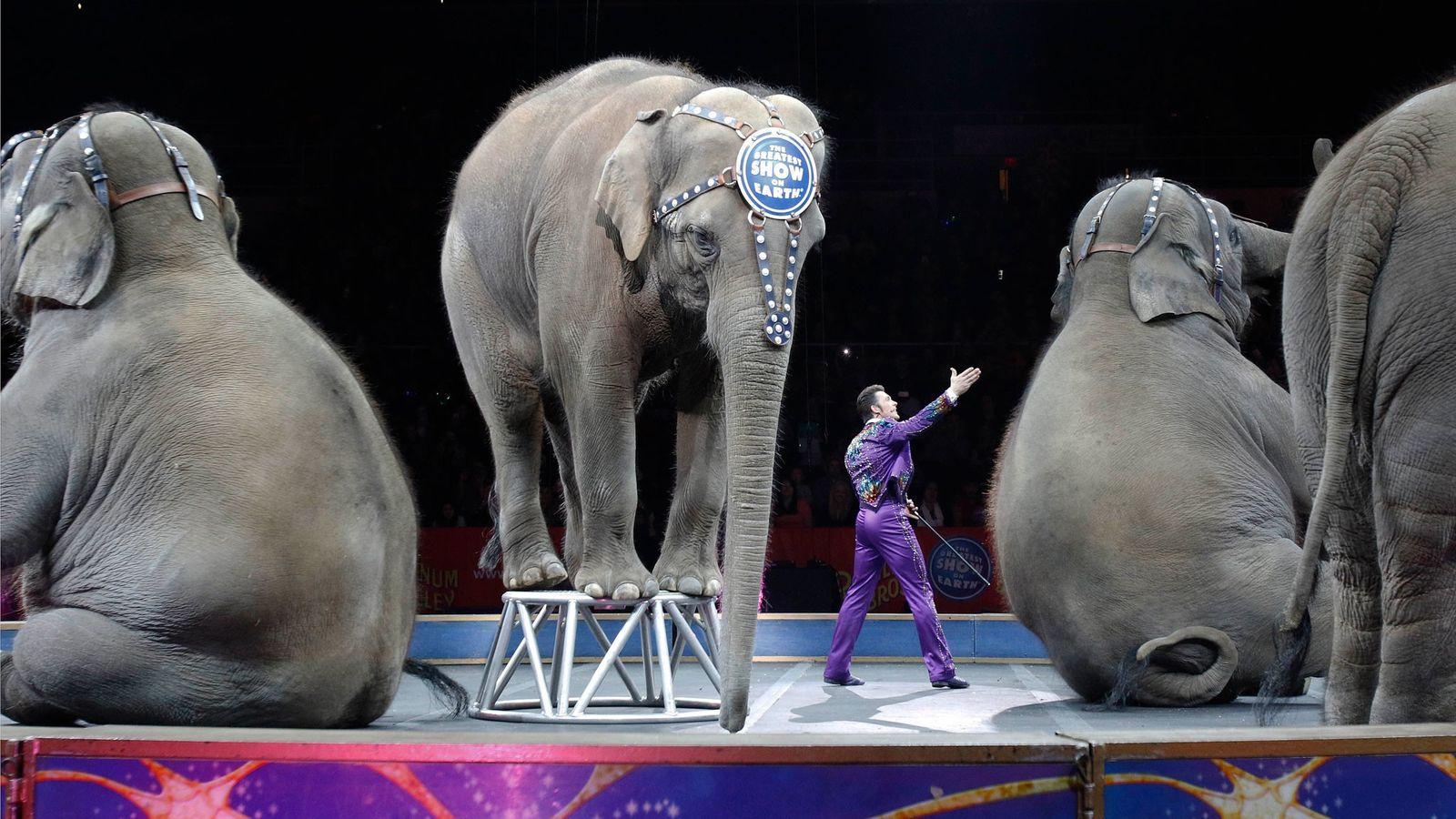 Los elefantes asiáticos de Ringling Bros