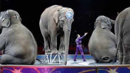 Los elefantes retirados del circo Ringling Bros. serán trasladados a un centro de conservación
