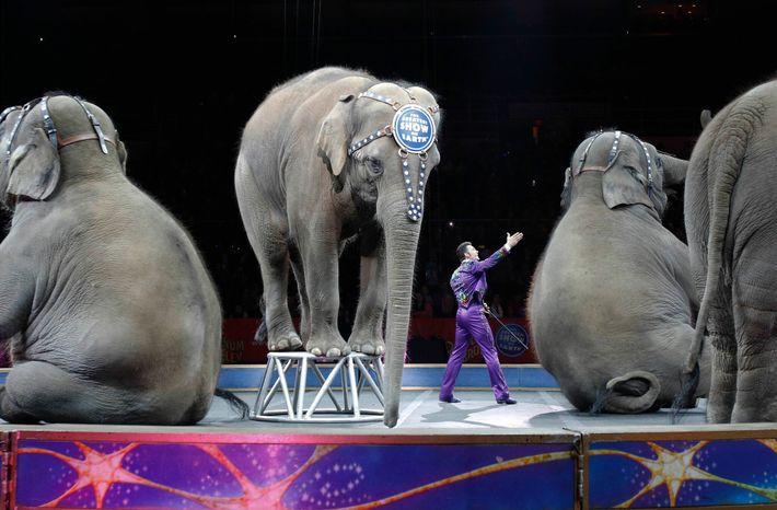Elefantes retirados del circo Ringling Bros. and Barnum & Bailey
