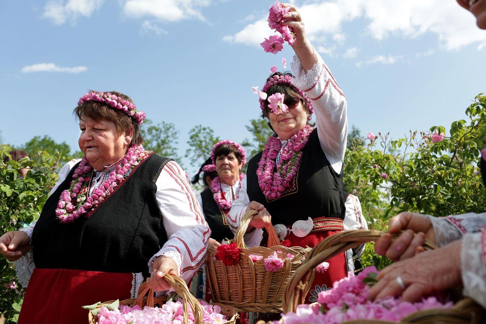 Festival de la Rosa