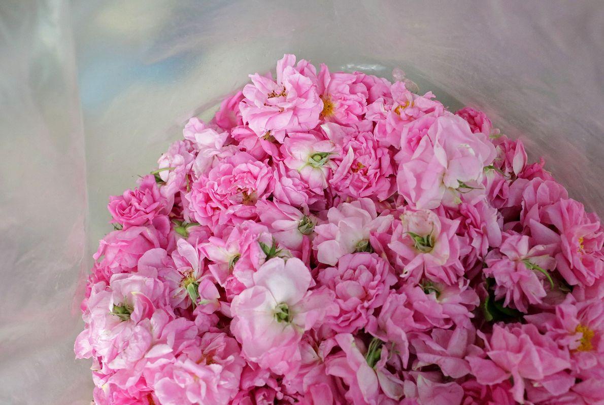 Una bolsa de rosas