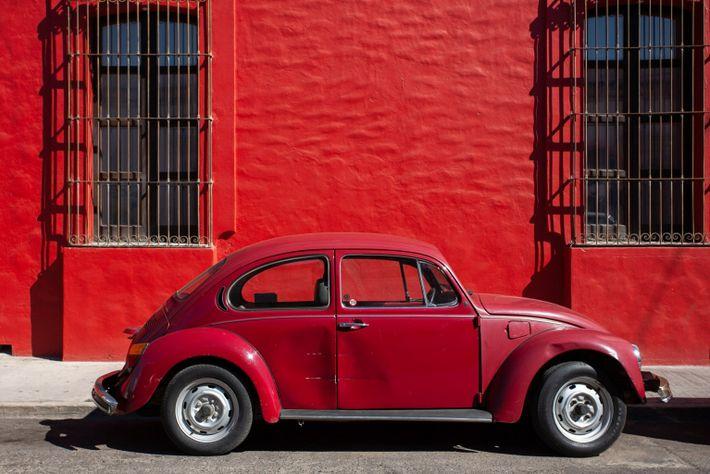 Oaxaca Bug-Red