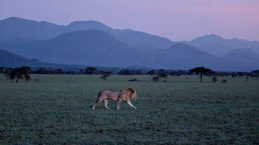 5 consejos para sacar mejores fotos cuando vayas de safari