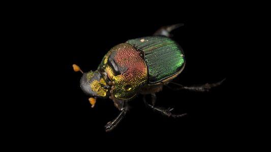 Photo Ark: Las fotografías más impresionantes de los escarabajos del mundo