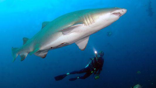 Los mejores lugares para bucear entre tiburones y naufragios