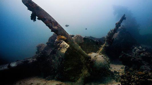 Bucea entre los trepidantes restos de naufragios de todo el mundo