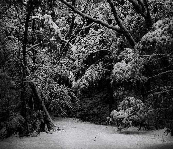 Un paisaje invernal