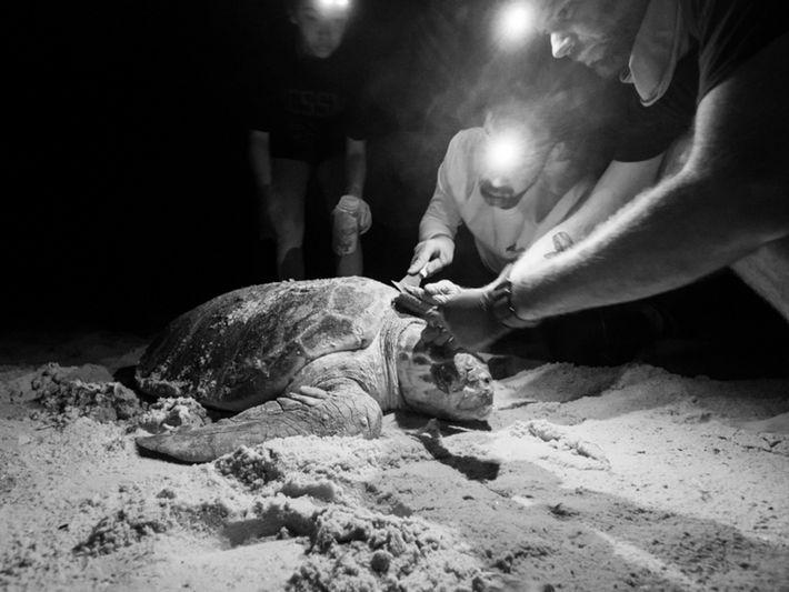Investigadores y tortuga