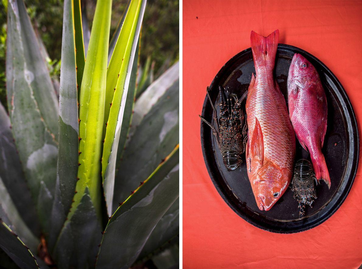Plantas y pescado
