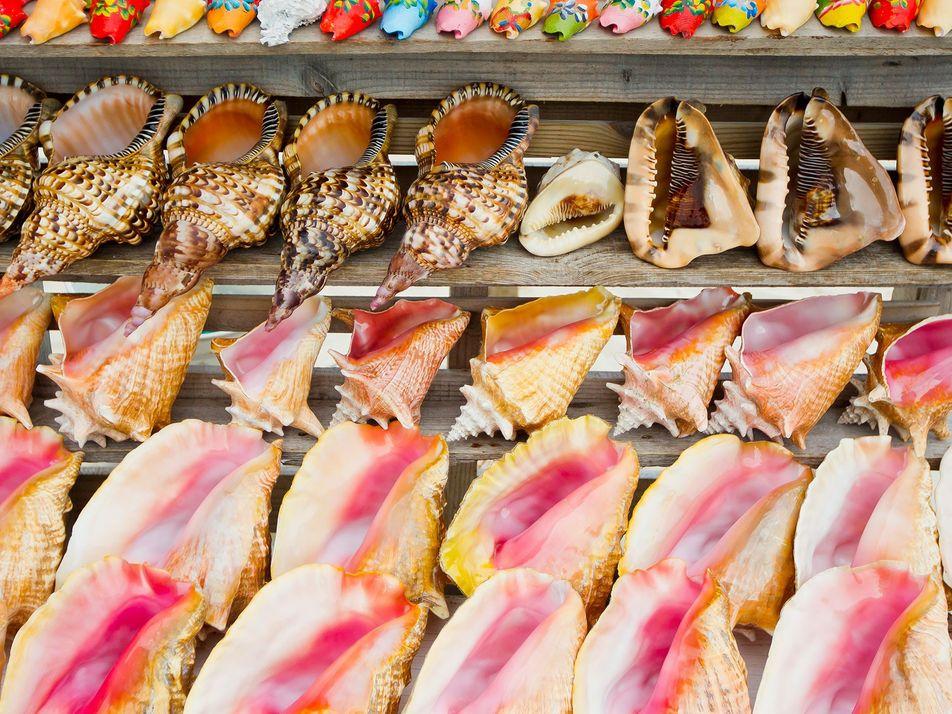 El comercio de caracolas como souvenirs mata a especies marinas protegidas