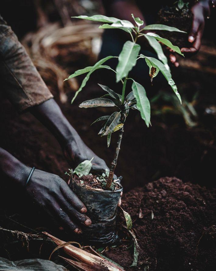 Jardinería forestal