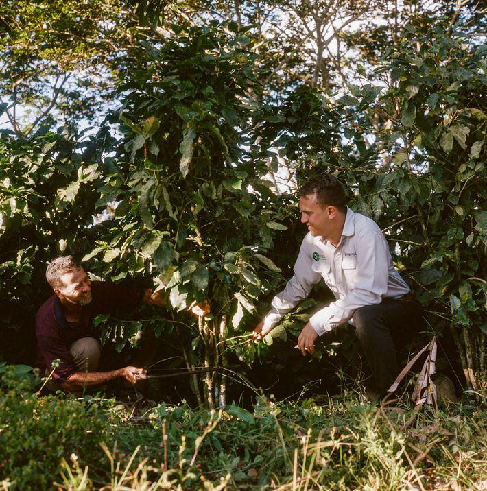 Un caficultor costarricense está abriendo el camino hacia la sostenibilidad total
