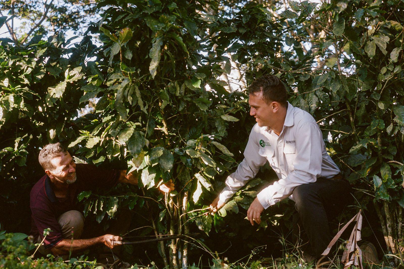 Luis Emilio con una nueva tanda de generosas cerezas de café, recién recolectadas. Luis se siente ...