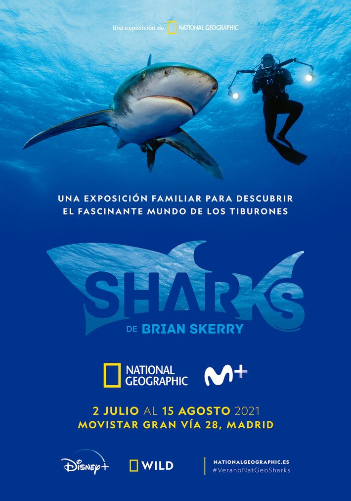 SHARKS de Brian Skerry estará disponible del 2 de julio al 15 de agosto en la Flagshipde ...