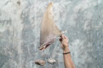 Una aleta de tiburón atada con rocas