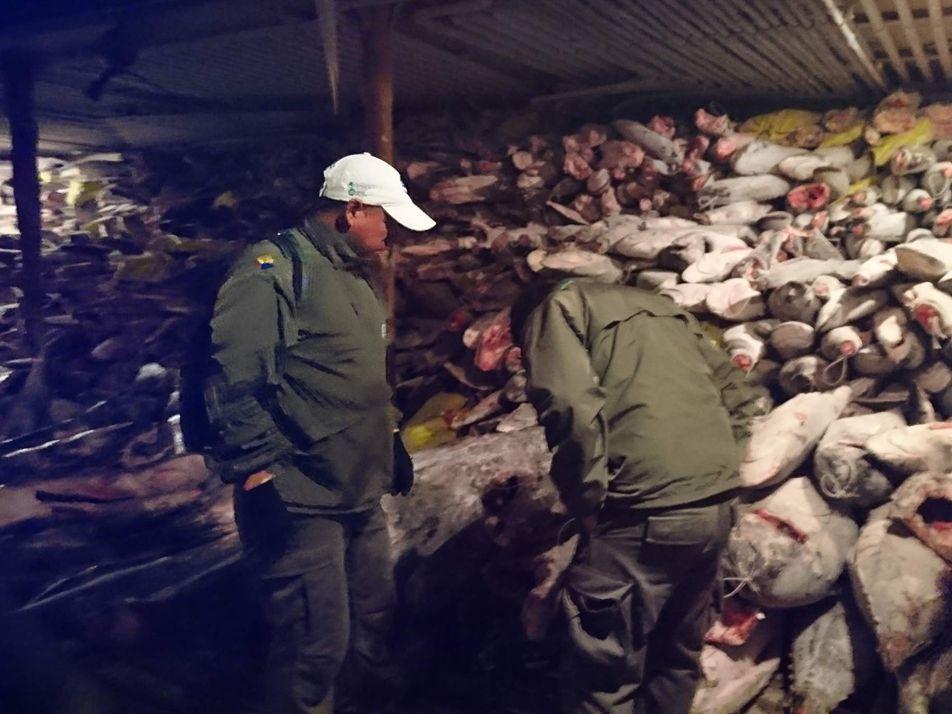 Este barco chino transportaba un cargamento ilegal de tiburones