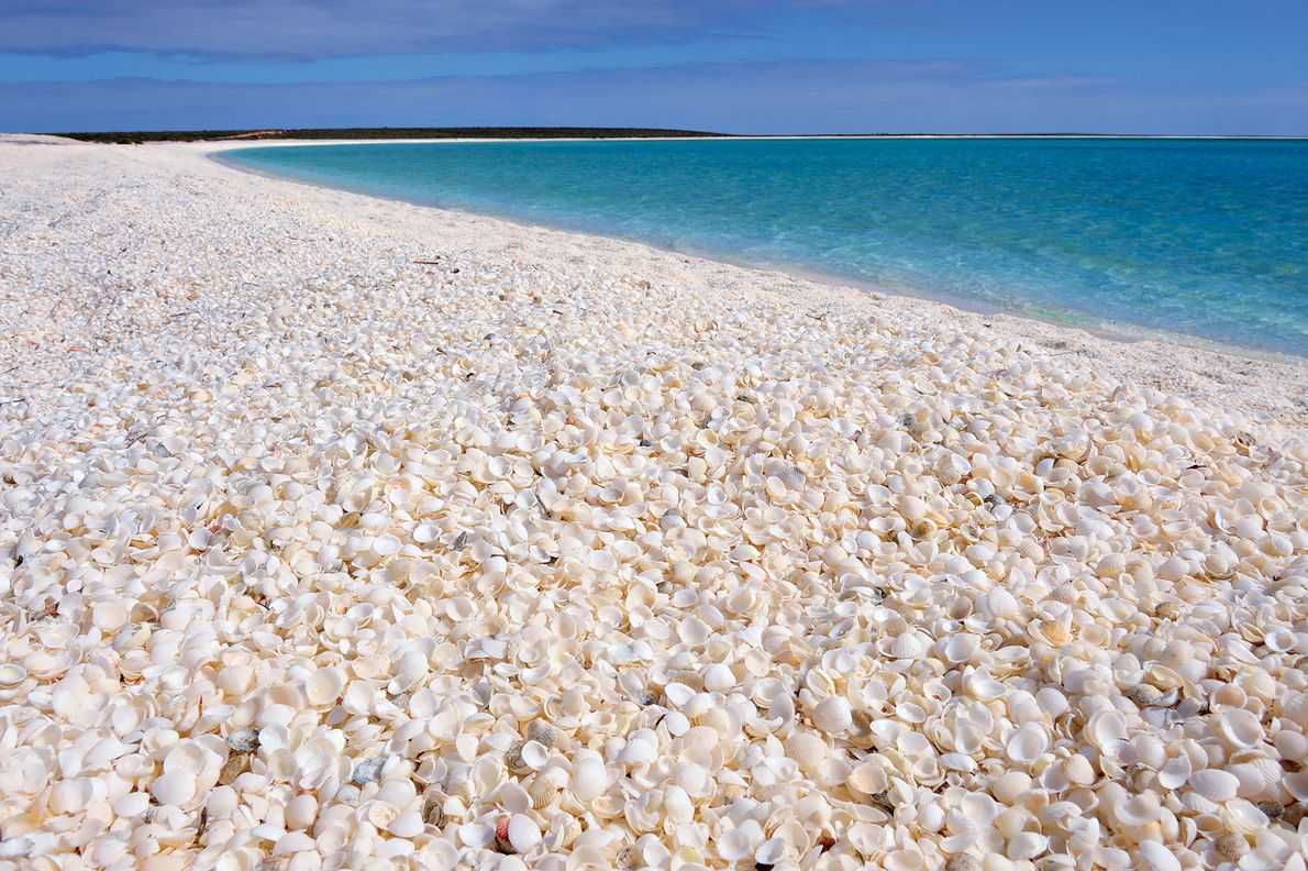 Imagen de Shell Beach en la bahía Shark, Australia occidental