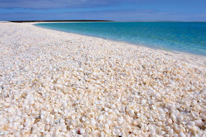 Imagen de Shell Beach en la bahía Shark, Australia occidental