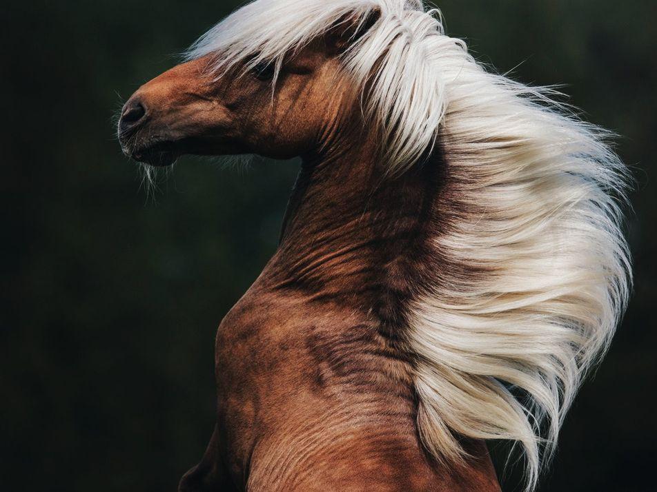 Fotos de animales del concurso de fotografía de Nat Geo