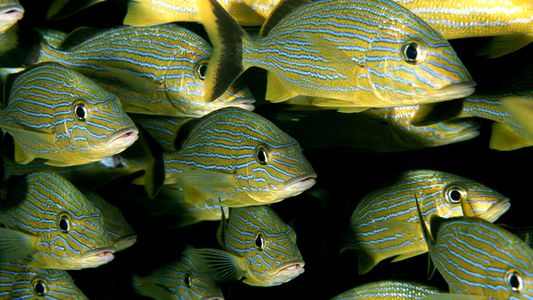 El cambio climático podría reducir el tamaño de los peces de todo el planeta