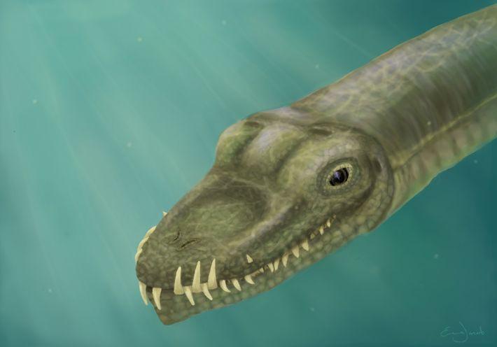 Reptil Tanystropheus