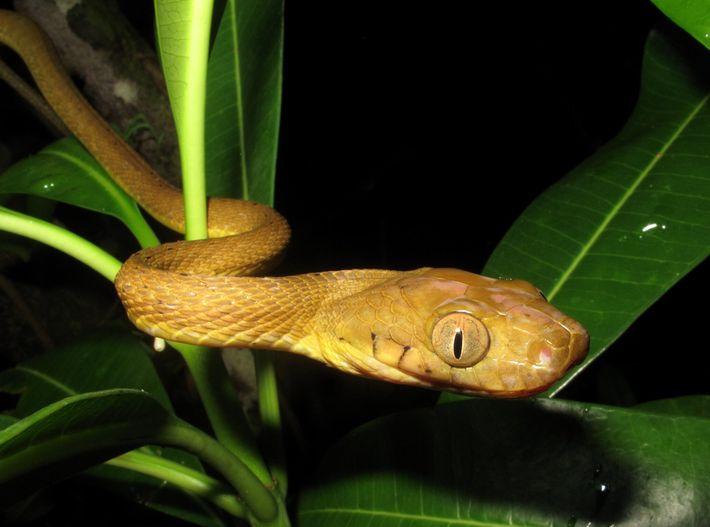 Foto de una serpiente arbórea marrón