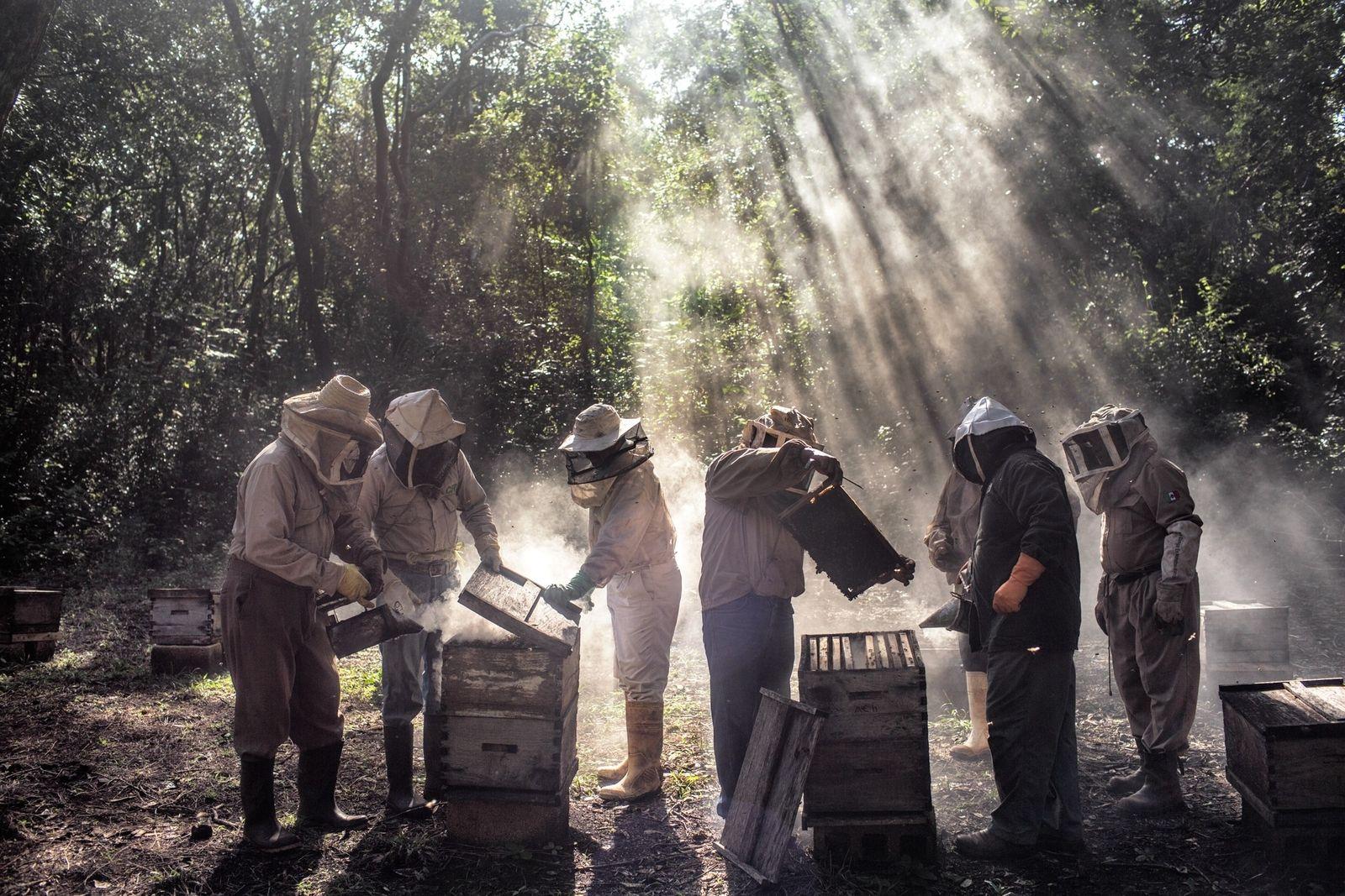Apicultores de Tinún, México