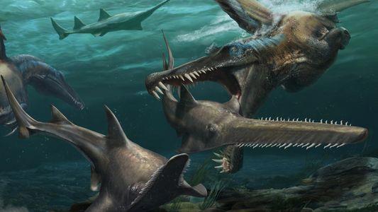 Nuevos dientes fosilizados respaldan la hipótesis de que el Spinosaurus era un depredador acuático