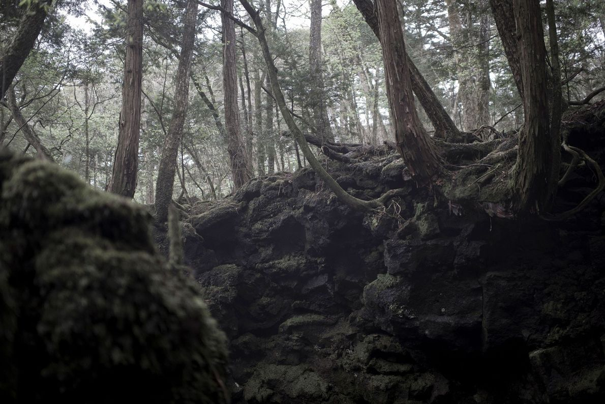 Bosque de Aokigahara, Japón