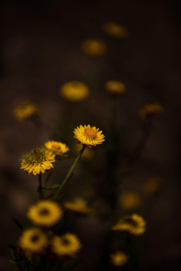 Flores endémicas