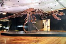 El fósil de Tyrannosaurus rexconocido como Stan