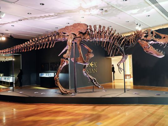 La venta del T. rex «Stan» por 31,8 millones de dólares enfurece a la comunidad científica