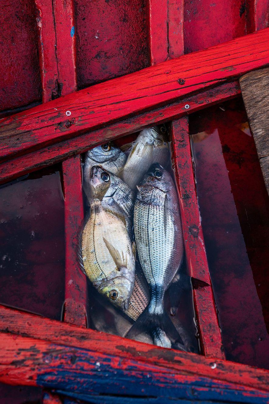 El mar Tirreno sustenta el sector pesquero de Estrómboli con capturas frescas como atún rojo, mero ...