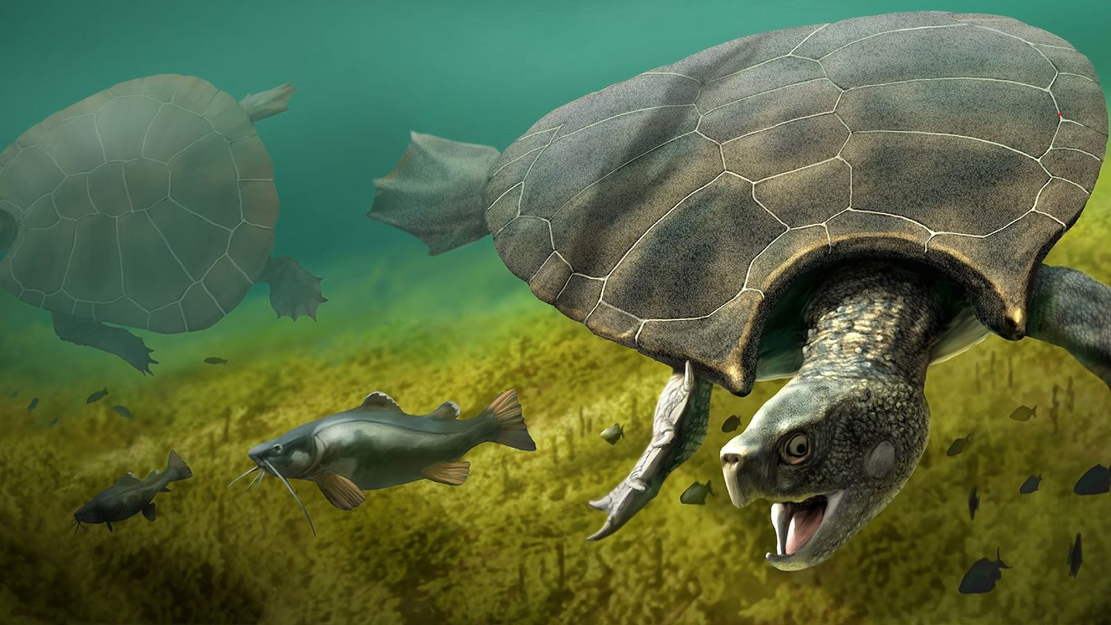 Stupendemys Geographicus tortuga
