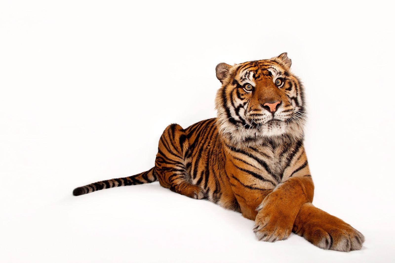 50 animales en peligro de extinción