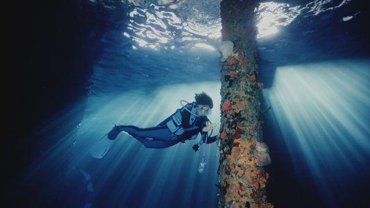 ¿Qué nos puede enseñar la oceanógrafa Sylvia Earle sobre la resiliencia?