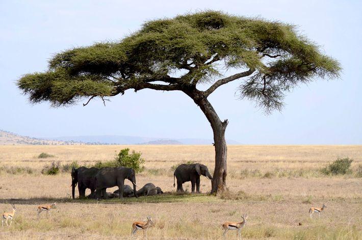 Unos elefantes a la sombra de un árbol